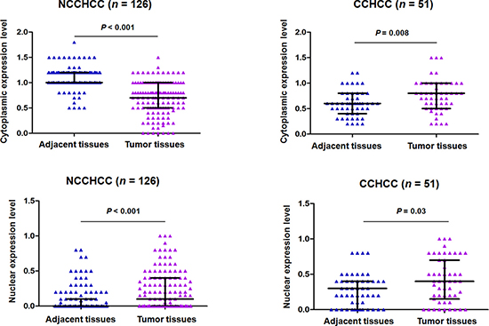 TERT subcellular expression in paired adjacent and tumor tissues of NCCHCC and CCHCC.