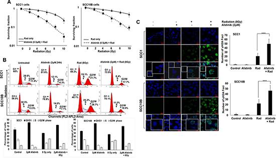 Afatinib radio-sensitizes HNSCC cells.