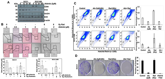 Afatinib affects cancer stem cells in HNSCC cells.