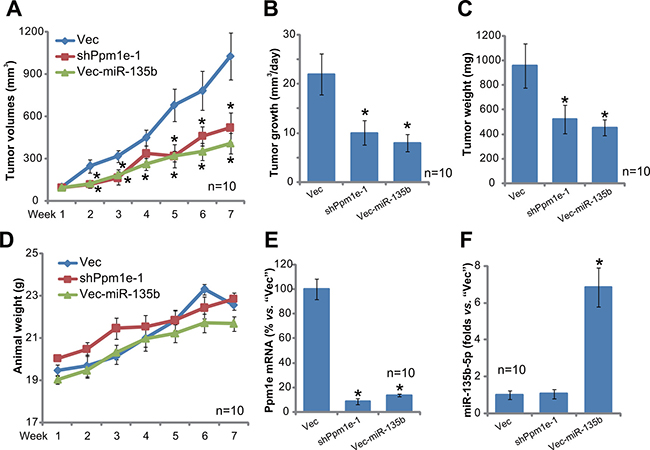 U2OS tumor growth in SCID mice is inhibited after expressing Ppm1e shRNA or miR-135b-5p.