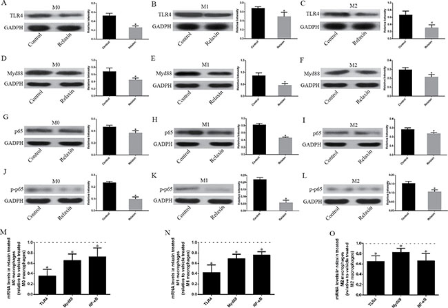 Relaxin downregulates the TLR4-NF-κB signaling pathway in vitro.