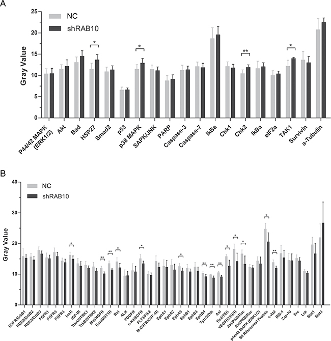 Effects of RAB10 knockdown on stress, apoptosis and RTK signaling pathways in SMMC-7721 cells.