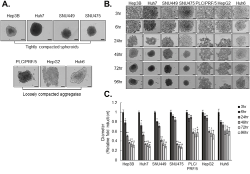 HCC cell lines differ in spheroid-forming capacity.