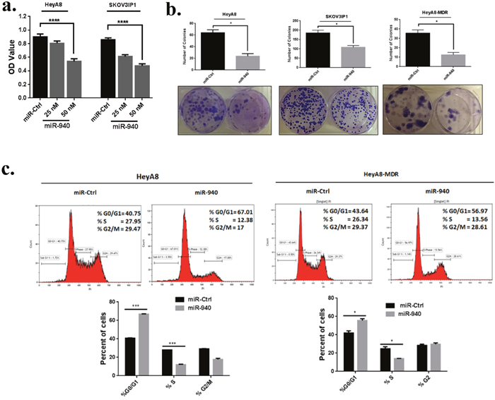 miR-940 inhibits OC cell growth in vitro and induces G0/G1 cell cycle arrest.