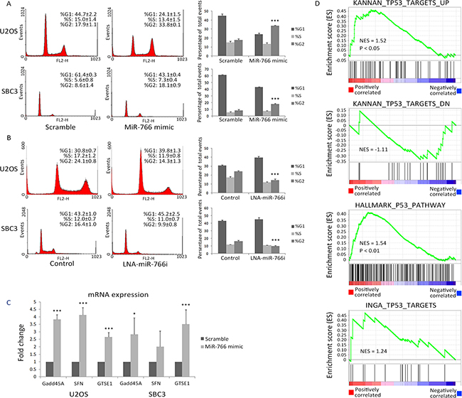 miR-766 is positively correlated with active p53 signalling.