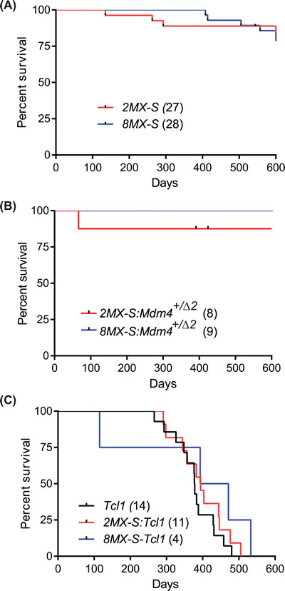 Mdm4-S overexpression does not cooperate with other oncogenic insults.