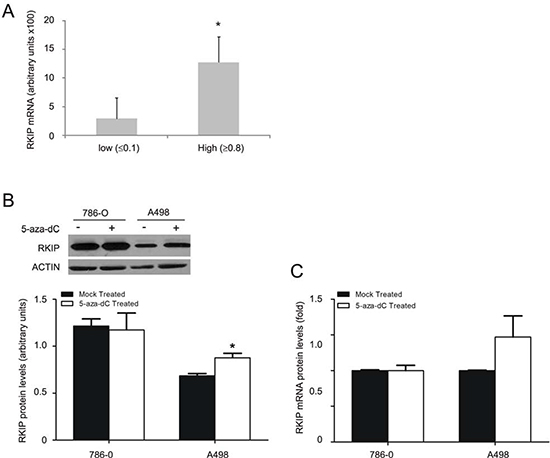 Regulation of RKIP transcription contributes to decease of RKIP in ccRCC.