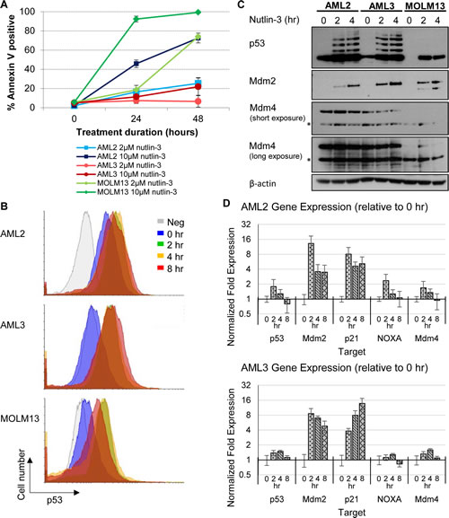 Differential p53 and apoptotic response of AML cell lines towards nutlin-3, with AML2 cells having high basal p53 levels.