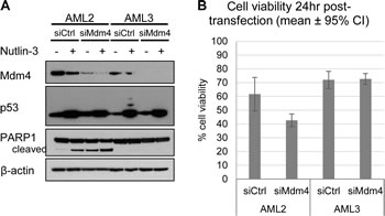 Knockdown of Mdm4 induced cell death in AML2, but not in AML3.