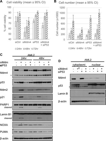 Knockdown of p53 rescues Mdm4 depletion-induced cell death in AML2.