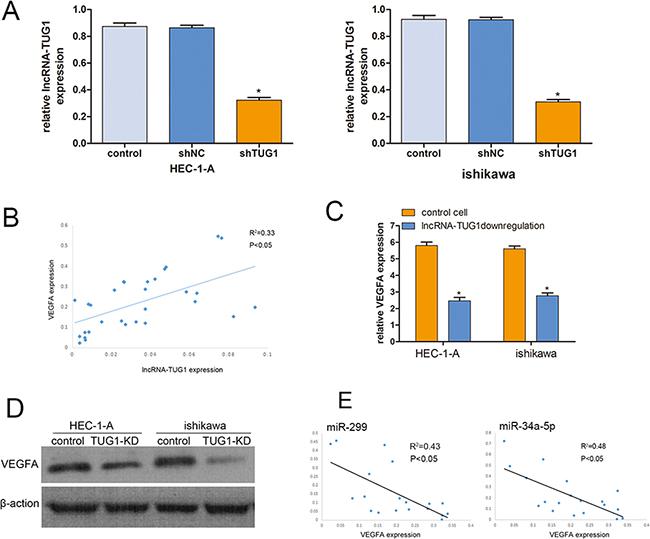 Knockdown lncRNA-TIG1 in EC cells.