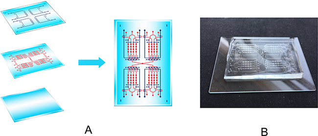 The design of a cell culture microfluidic chip.