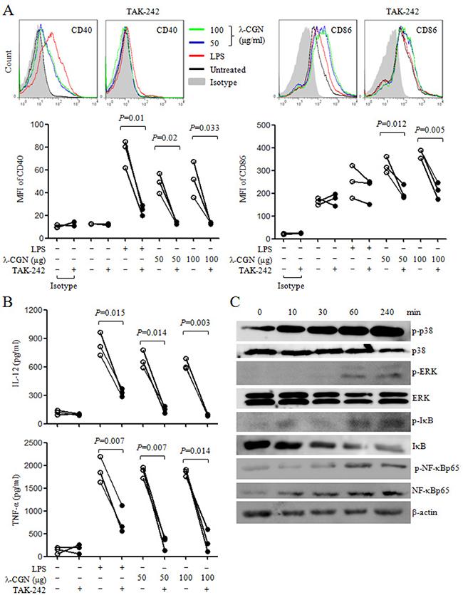 λ-CGN promotes DC maturation and cytokine production through TLR4 signaling pathway.