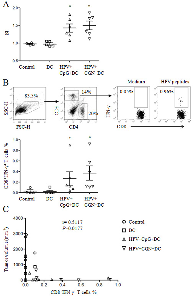 HPV DC-based vaccines induced antigen-specific cellular responses.