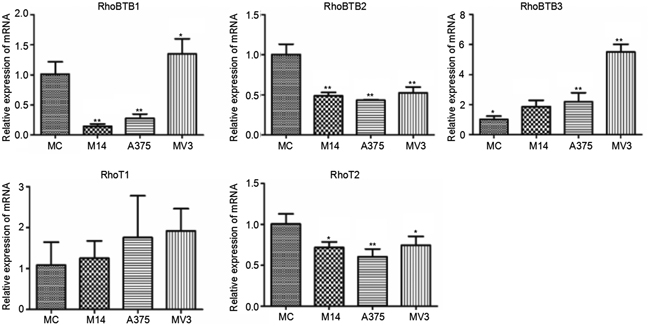 Differences in Rho BTB subtribe and Miro subtribe transcription among 4 types of cells.