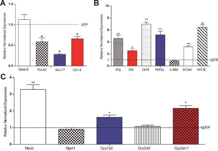 The effect of Cre-mediated removal of SV40 T antigen on the basal expression of liver stemness markers and hepatic differentiation-associated genes in the iHPx cells.