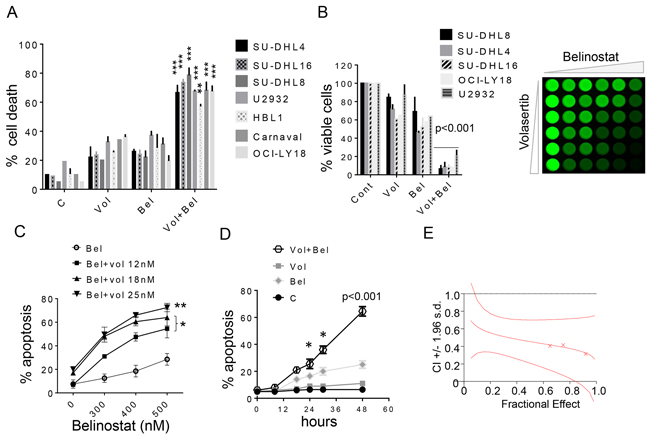 Belinostat dramatically increases volasertib lethality and inhibits cell growth in DLBCL cells.