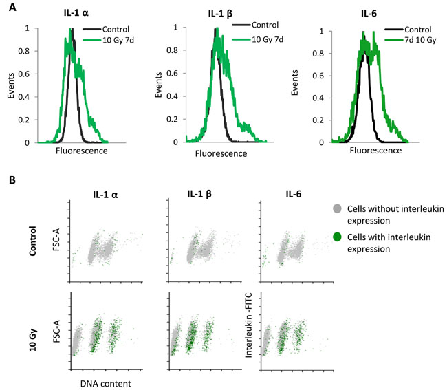 Single cells analysis of SASP expression in MRC5 cells irradiated with 10 Gy.