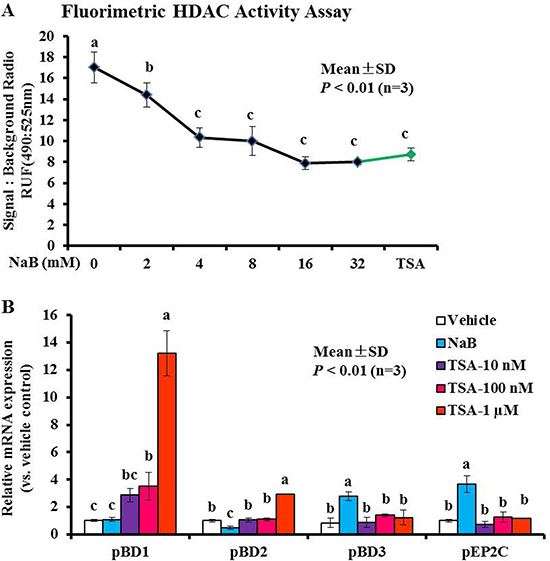Modulation of histone acetylation activity and AMP gene expression in response to NaB or TSA.