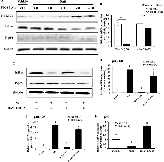 NF-κB pathway plays an important role, while AMP expressionwas ameliorated by NaB in PK-15 cells.