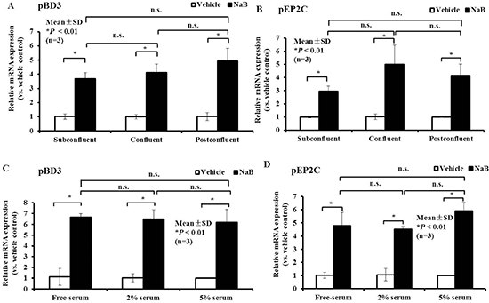 Effect of cell density or serum concentration on NaB governs the up-regulation of AMP expression.