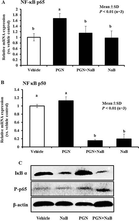 Effect of NaB (8 mM),