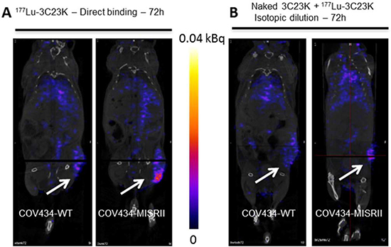 SPECT/CT imaging of COV434-MISRII and COV434-WT cell-derived xenografts in nude mice.