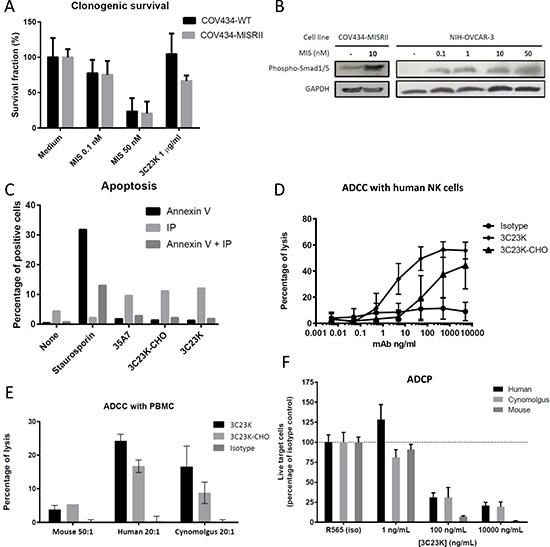 In vitro studies to determine 3C23K mechanisms of action.