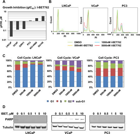 Characterization of I-BET762 sensitivity in prostate cancer cell lines.