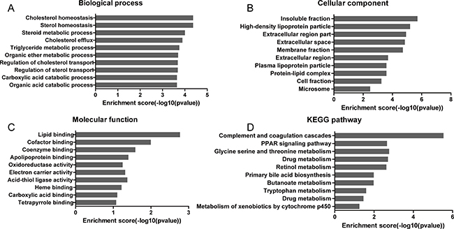 GO and KEGG analysis of the significantly correlated mRNAs targeted by lncRNAs.