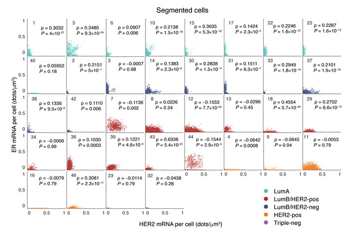 Single-cell correlation between HER2 and ER mRNA density in all the 36 segmented tumors grouped by molecular subtype.