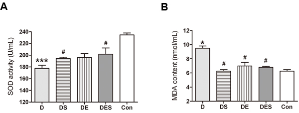 Effects of spermidine and exercise on SOD activity and MDA content of aging model rats (