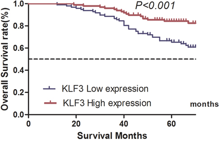 Correlation between Kruppel-like factor 3 (KLF3) mRNA expression and overall survival of patients with colorectal cancer in the validation database.