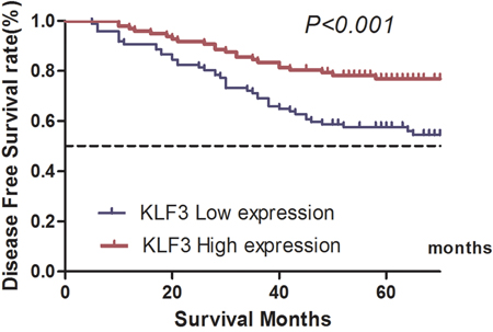 Kaplan–Meier estimates of disease-free survival of patients with colorectal cancer with different expression levels of Kruppel-like factor 3 (KLF3) mRNA levels.