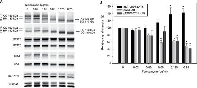 Tunicamycin inhibits glycosylation and modulates signal transduction of FLT3ITD.