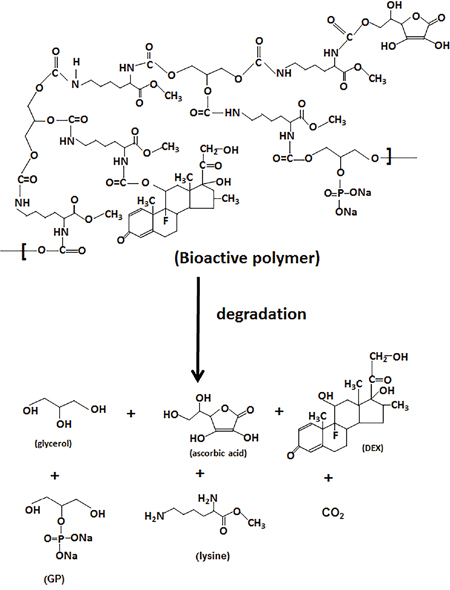 Scheme IV: Degradation of bioactive molecules containing polymer scaffold.