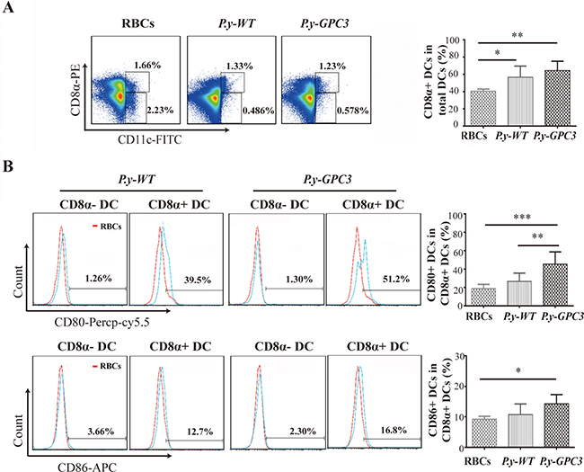 Expansion of CD8α+ DC subset with preferential expression of CD80 and CD86 molecules in P.y-GPC3-vaccinated mice.