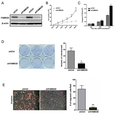 Biological consequences of FAM83D knockdown in BT549 cells.