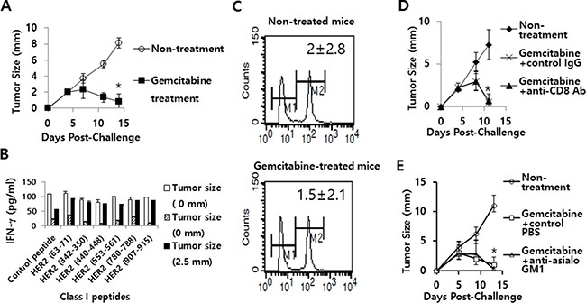 The effects of gemcitabine on tumor growth, IFN-γ induction and CTL lytic activity in responses to HER2 class I peptides, as well as the role of CD8+ T and NK cells in gemcitabine-induced tumor regression.