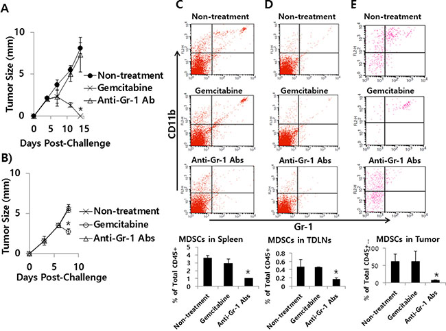 The effects of gemcitabine and anti-Gr-1 Ab treatment on tumor growth and MDSC levels in the spleen, TDLN and tumor.