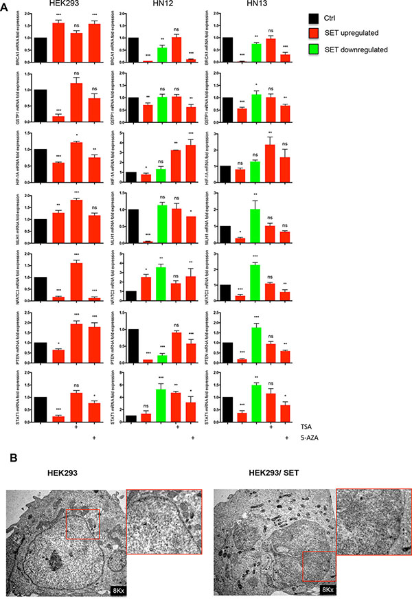 Histone acetylation is more effective than DNA demethylation in reactivating gene expression in SET-accumulating cells.