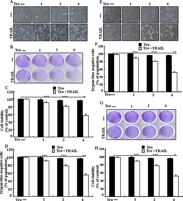 Troglitazone sensitizes TRAIL-mediated apoptosis in human lung adenocarcinoma cells.