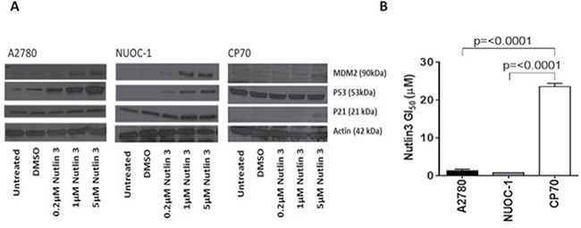 p53 function in NUOC1 cells.
