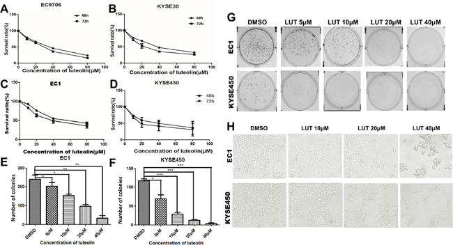 Luteolin inhibited cell proliferation and growth in ESCC cells.