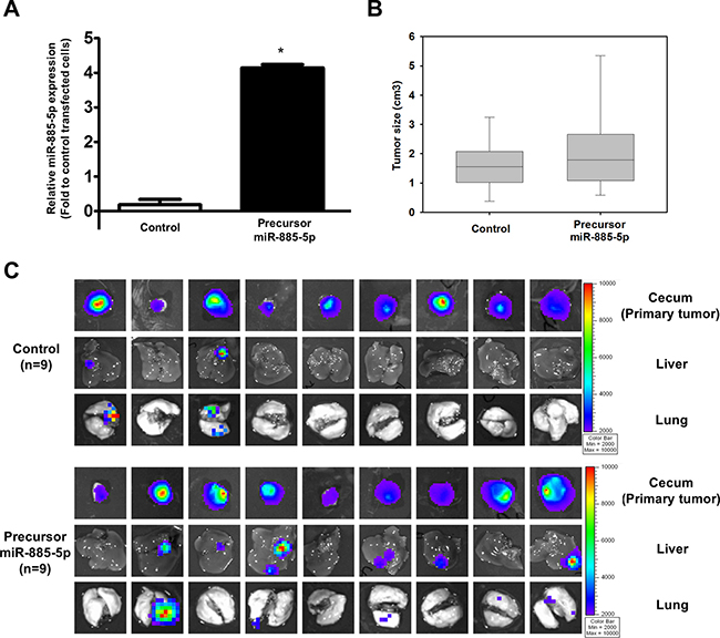 miR-885-5p induces CRC metastasis in vivo.