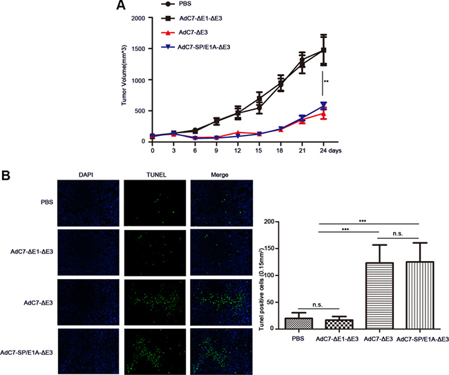 AdC7-SP/E1A-ΔE3 inhibit tumor growth in nude mouse NCI-H508 cell xenografts.