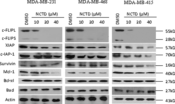 NCTD suppresses c-FLIP expression and Mcl-1 in breast cancer cells.