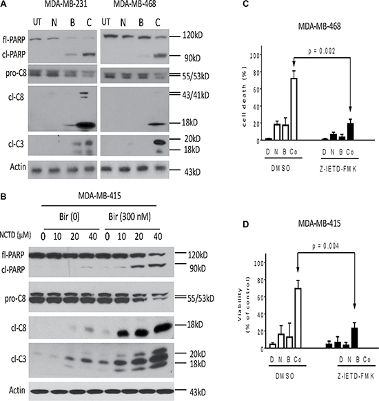 Caspase activity plays a critical role in apoptosis induced by Birinapant in combination in breast cancer cells.