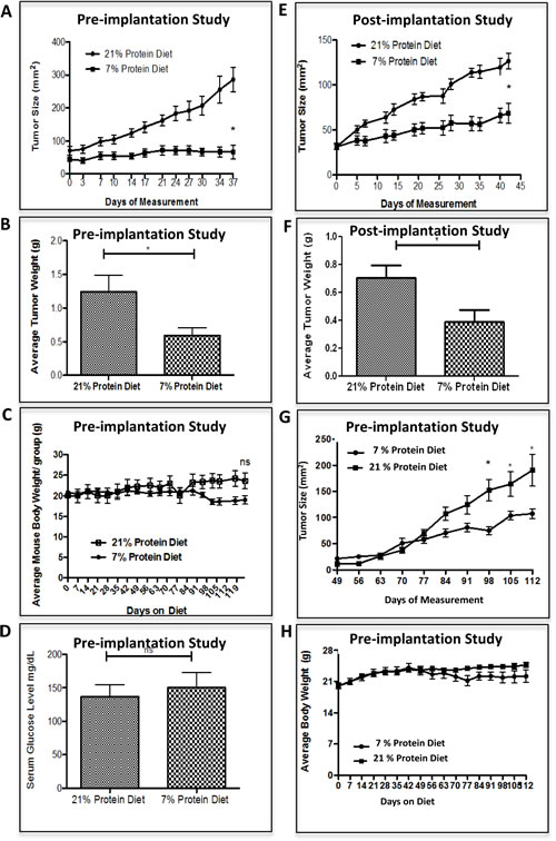 Low protein diet attenuates the growth of prostate and breast cancer in the castrate-resistant LuCaP23.1 model and in the WHIM16 model, respectively.