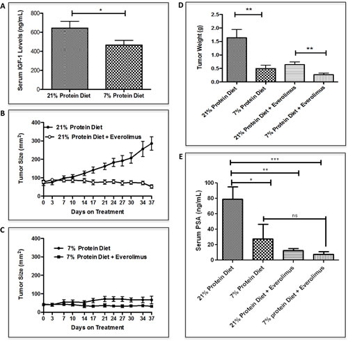 Low protein diet decreases IGF-1 serum levels and inhibit LuCaP23.1-CR growth in combination with everolimus.